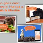 Grosh goes east: Launches in Hungary, Russia and Ukraine
